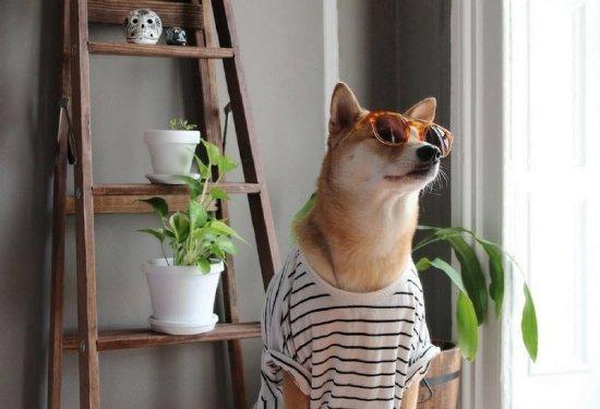 perro moda